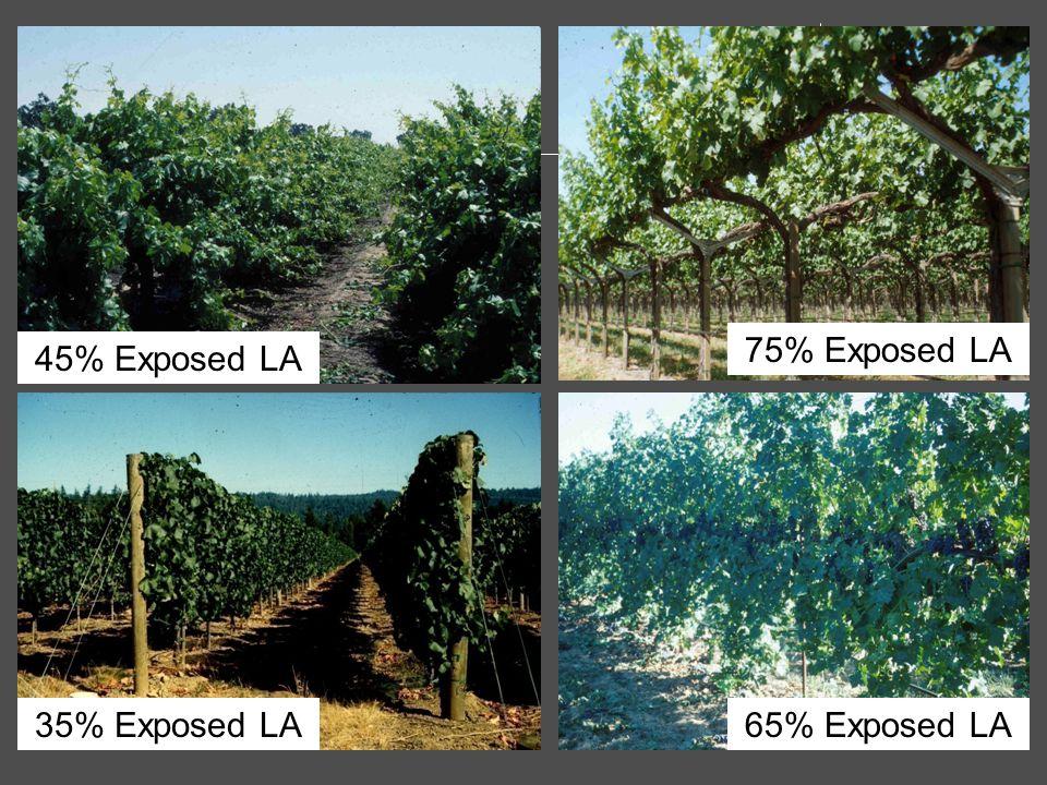 75% Exposed LA 45% Exposed LA 35% Exposed LA 65% Exposed LA
