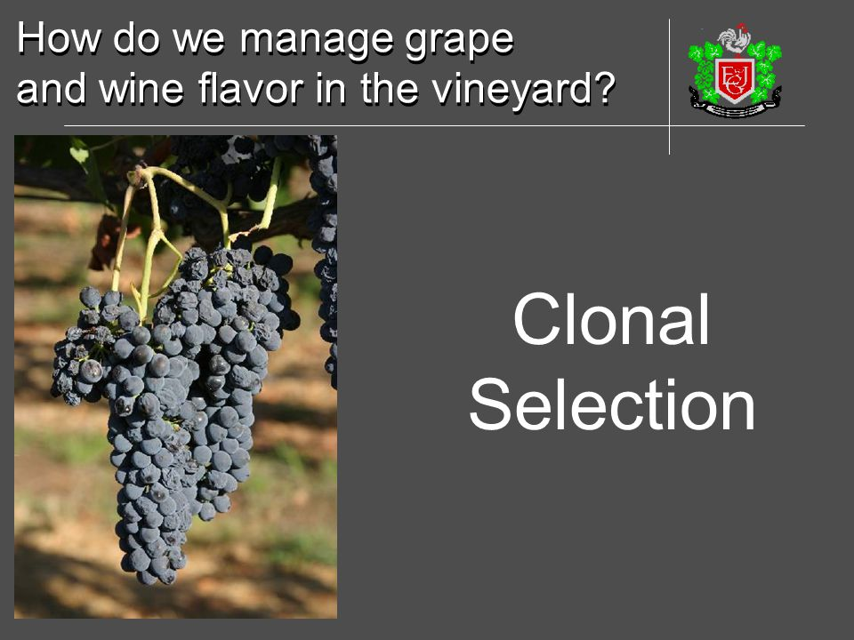 Clonal Selection How do we manage grape