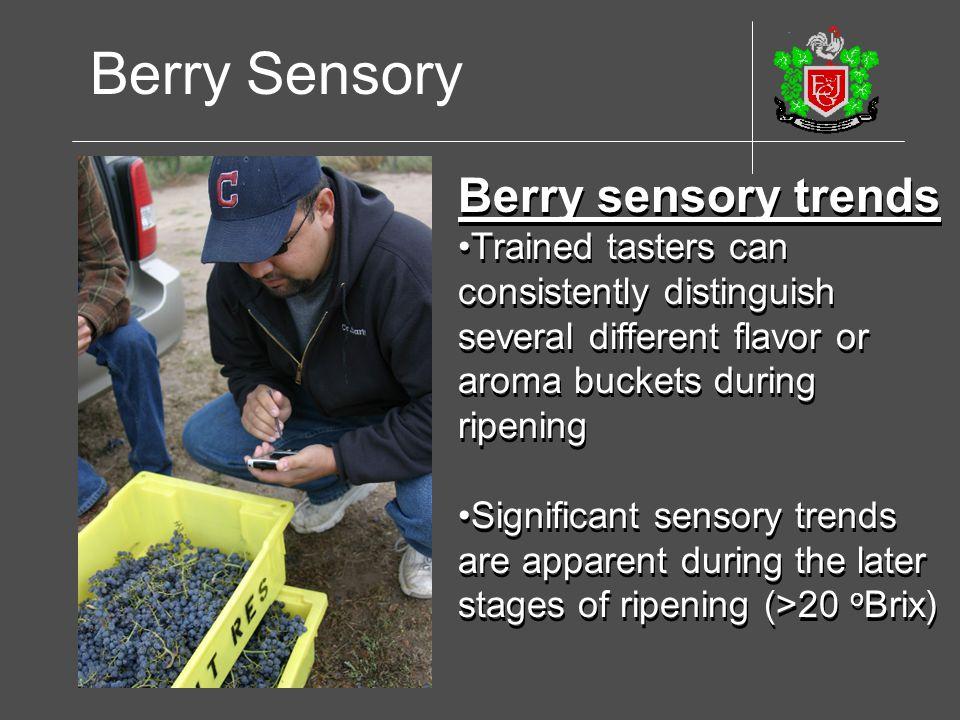 Berry Sensory Berry sensory trends
