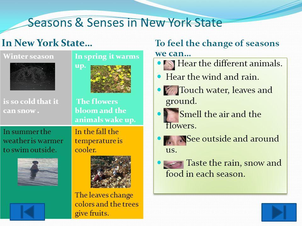 Seasons & Senses in New York State
