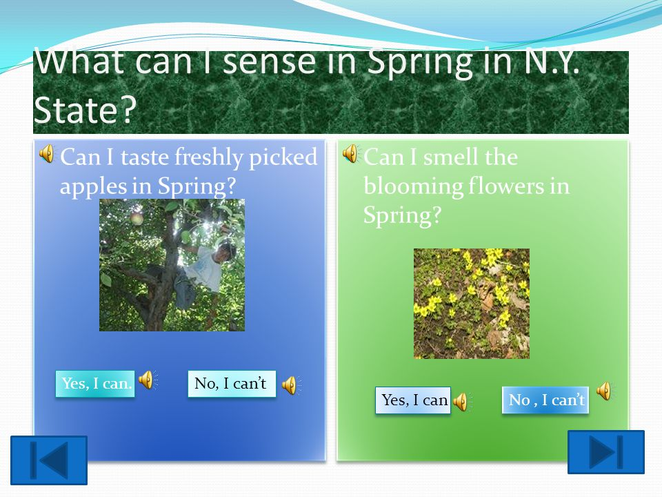 What can I sense in Spring in N.Y. State