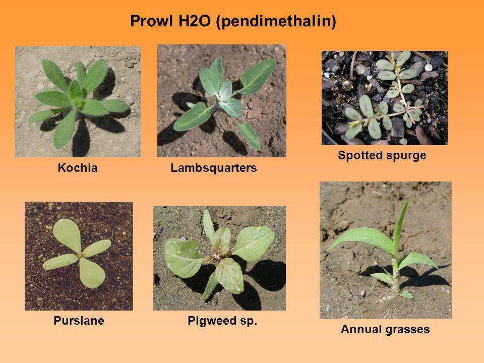 Prowl H2O (pendimethalin)