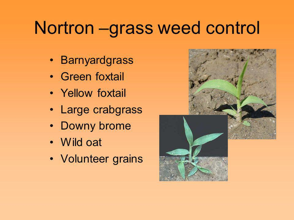 Nortron –grass weed control