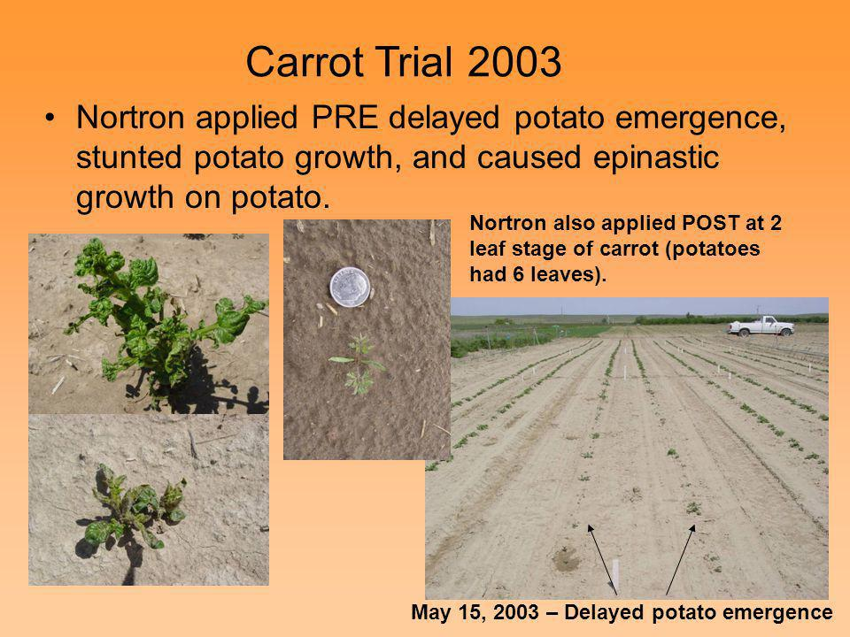 Carrot Trial 2003 Nortron applied PRE delayed potato emergence, stunted potato growth, and caused epinastic growth on potato.