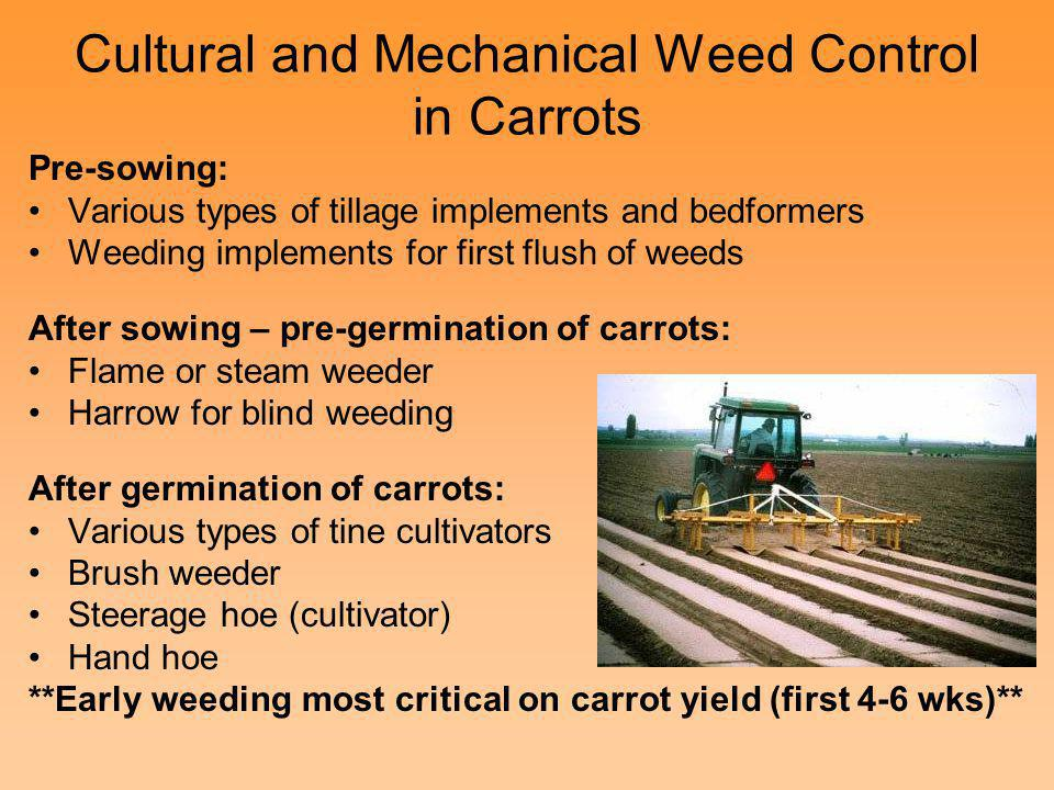 Cultural and Mechanical Weed Control in Carrots