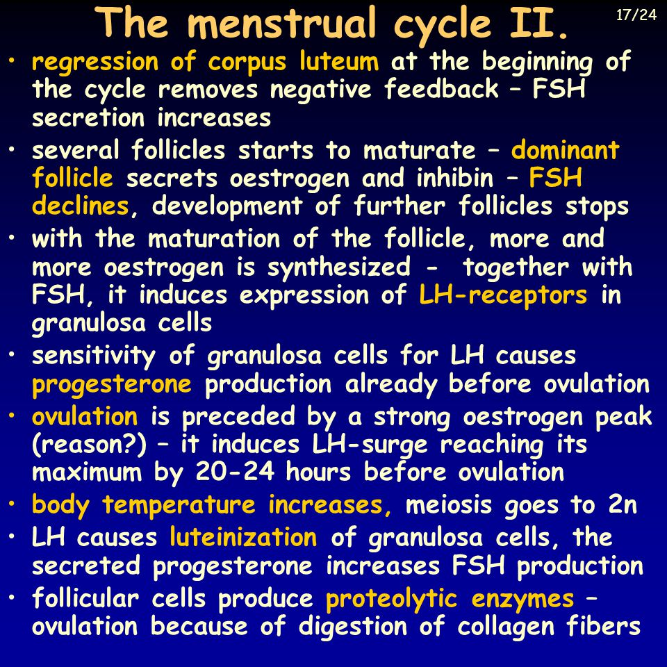The menstrual cycle II. 17/24. regression of corpus luteum at the beginning of the cycle removes negative feedback – FSH secretion increases.