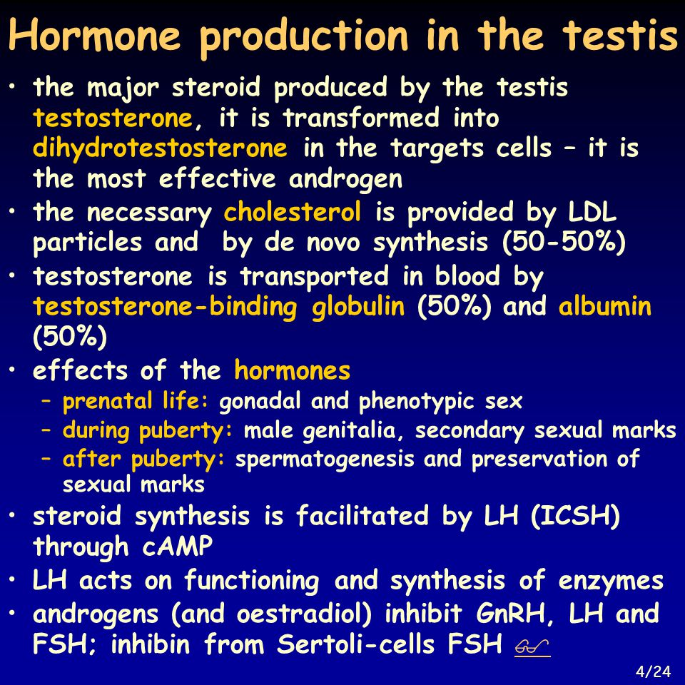 Hormone production in the testis