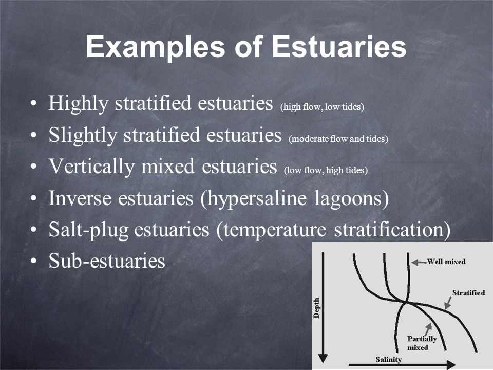 Examples of Estuaries Highly stratified estuaries (high flow, low tides) Slightly stratified estuaries (moderate flow and tides)