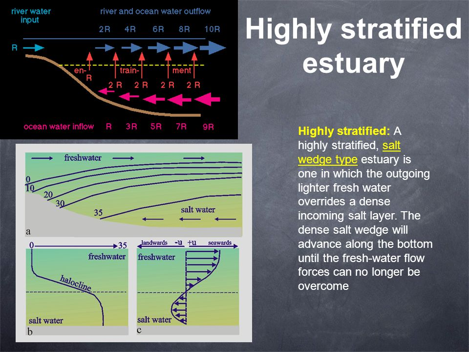 Highly stratified estuary