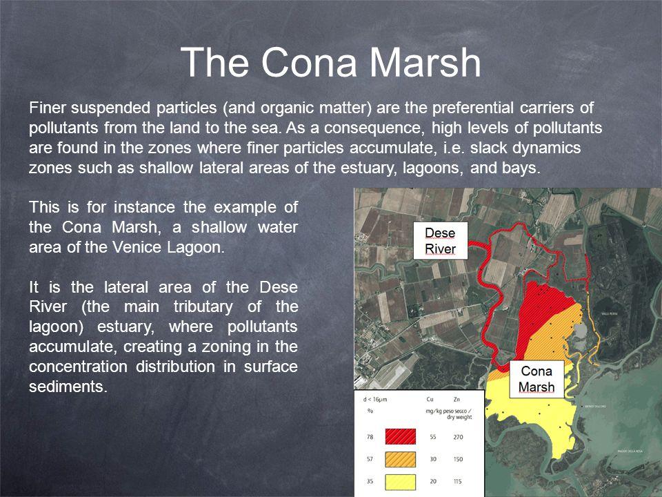 The Cona Marsh