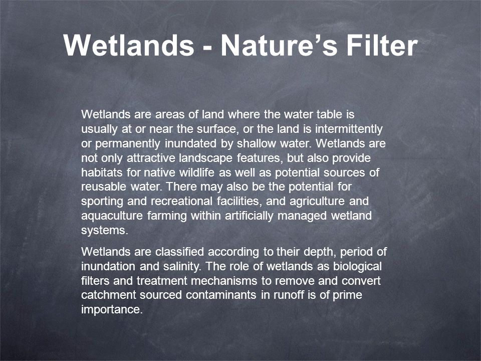 Wetlands - Nature's Filter