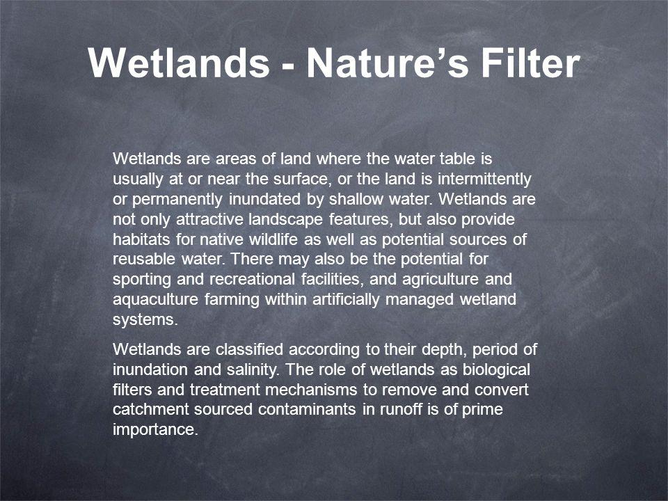 Wetlands - Nature's Filter