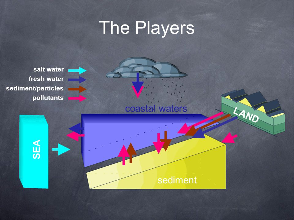 The Players coastal waters LAND SEA sediment salt water fresh water