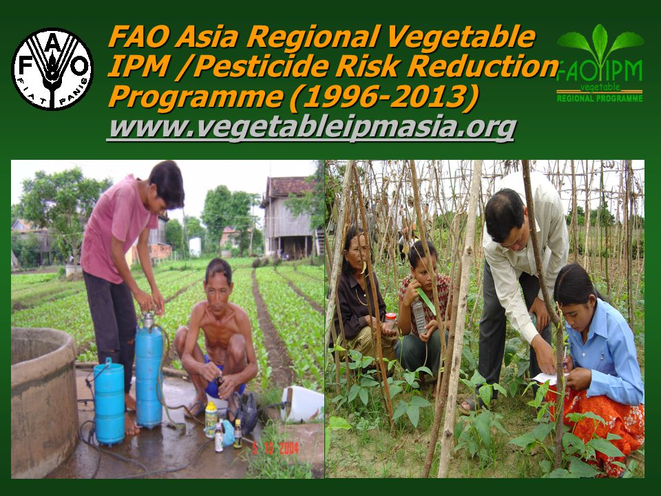 FAO Asia Regional Vegetable IPM /Pesticide Risk Reduction Programme (1996-2013) www.vegetableipmasia.org