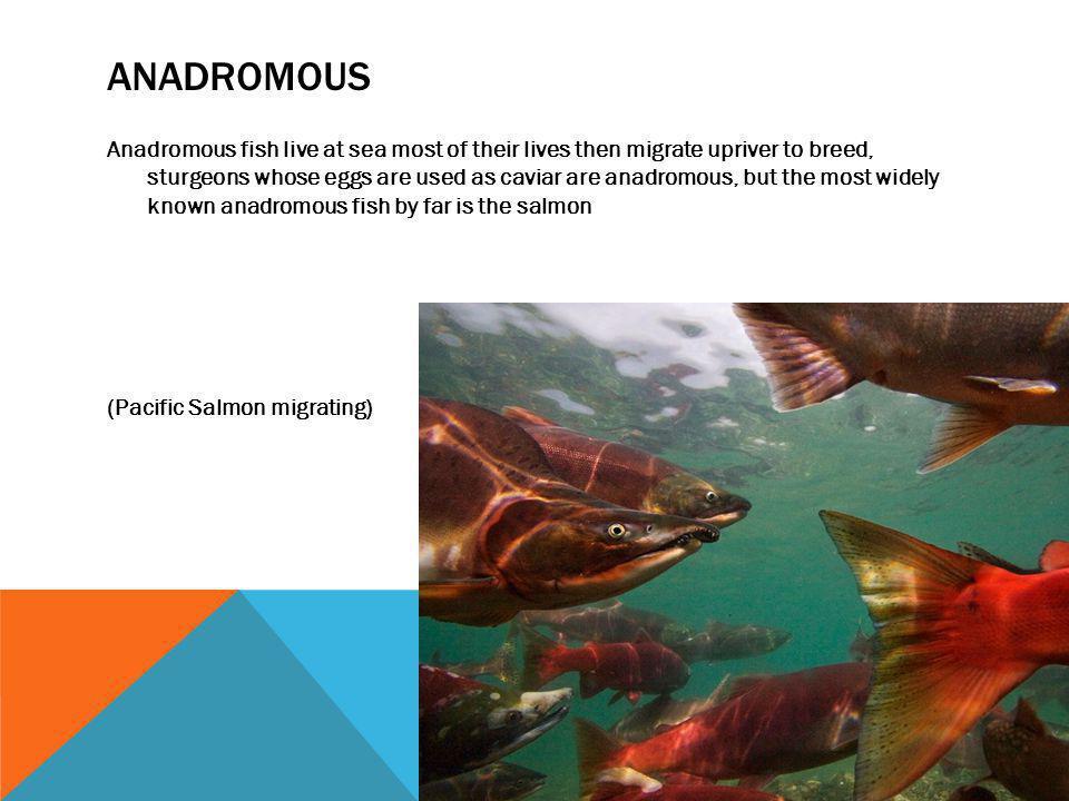 Anadromous