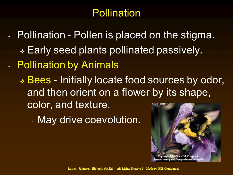 Pollination - Pollen is placed on the stigma.