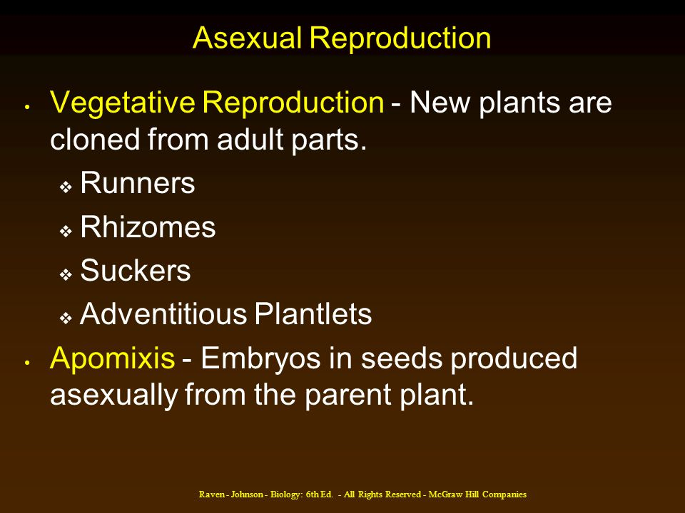 Vegetative Reproduction - New plants are cloned from adult parts.