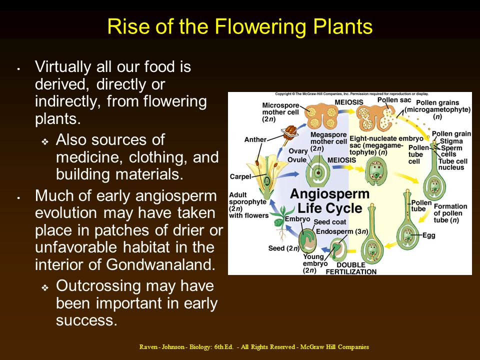 Rise of the Flowering Plants