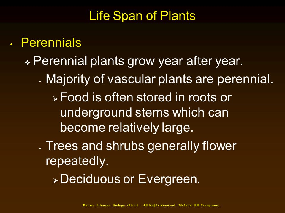 Perennial plants grow year after year.