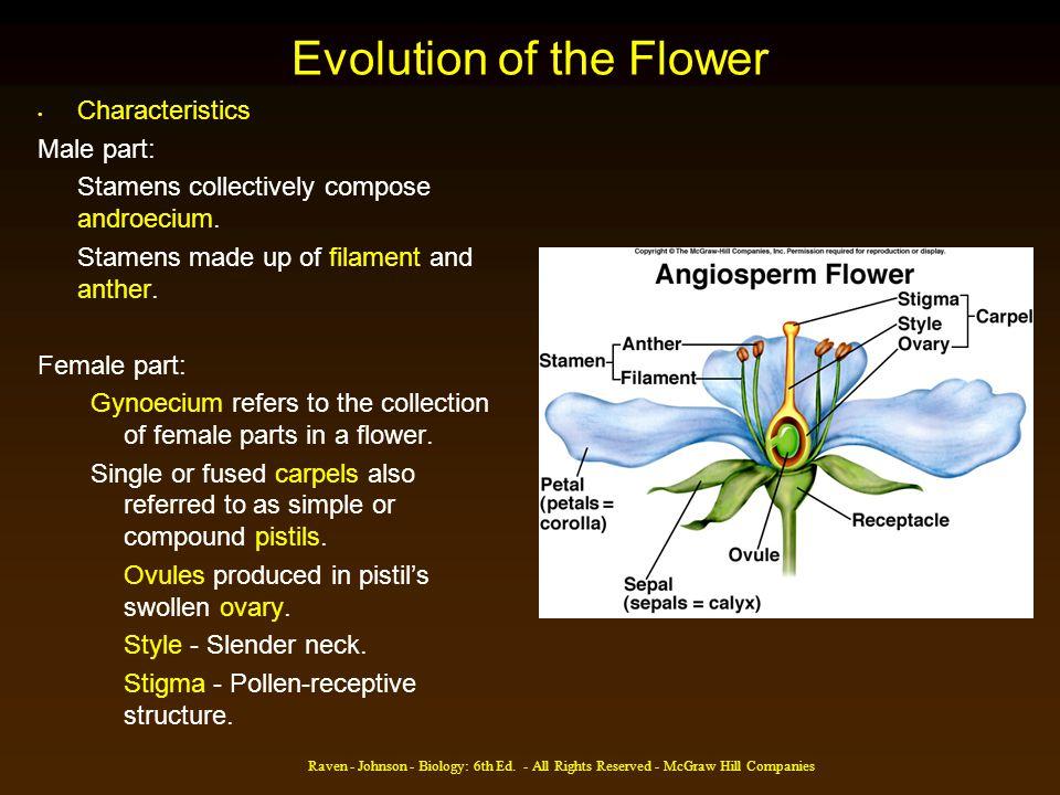 Evolution of the Flower