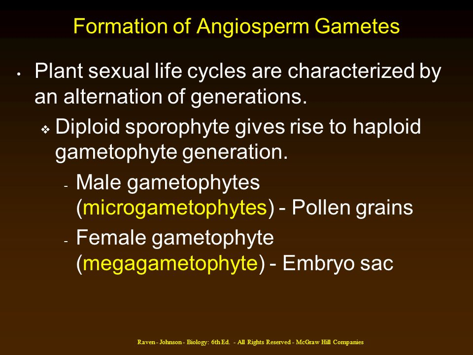 Formation of Angiosperm Gametes