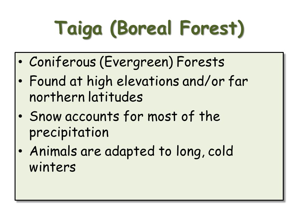Taiga (Boreal Forest) Coniferous (Evergreen) Forests