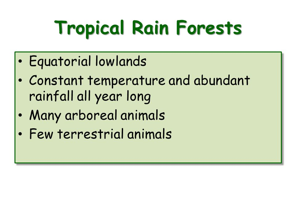 Tropical Rain Forests Equatorial lowlands