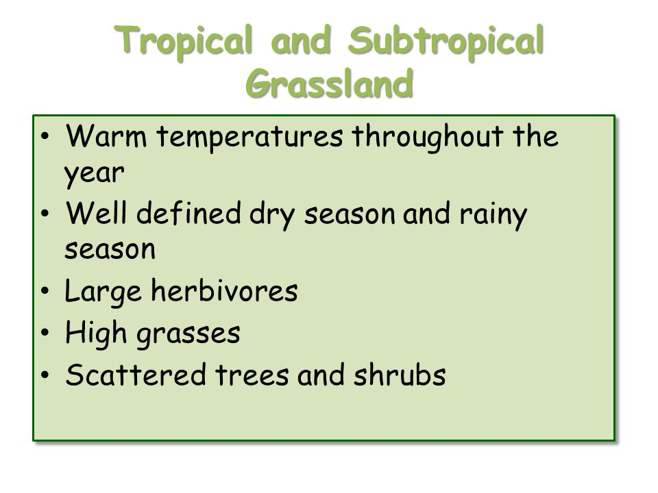 Tropical and Subtropical Grassland
