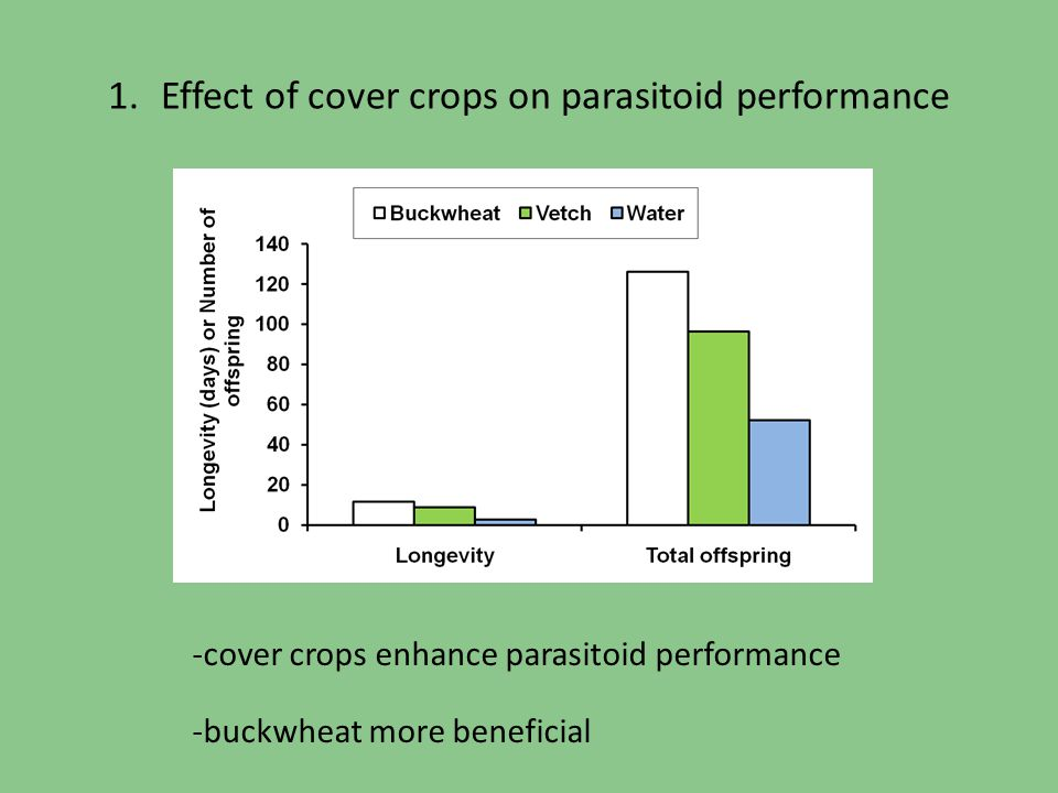 Effect of cover crops on parasitoid performance