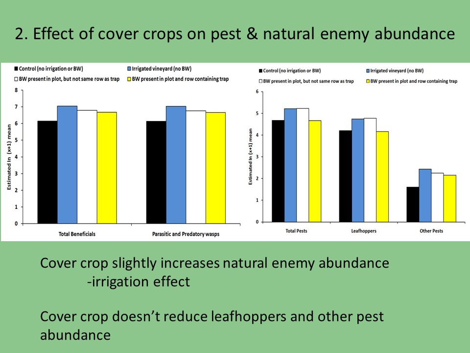 2. Effect of cover crops on pest & natural enemy abundance