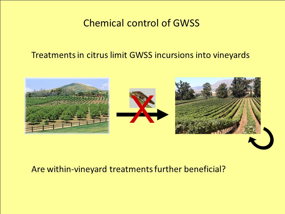 X Chemical control of GWSS