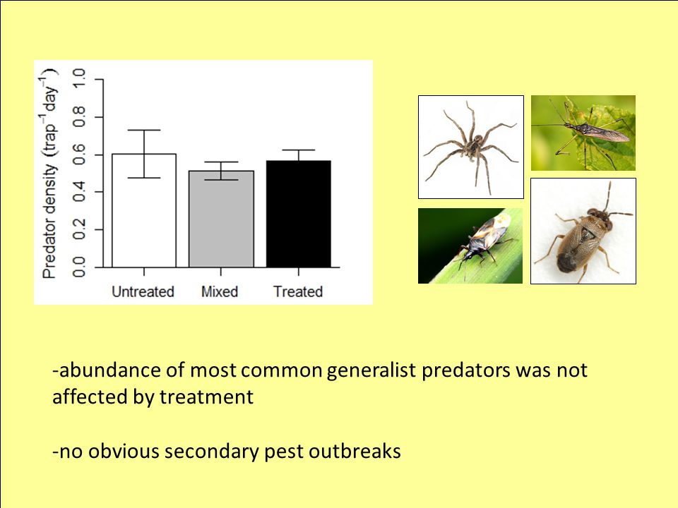 -abundance of most common generalist predators was not affected by treatment