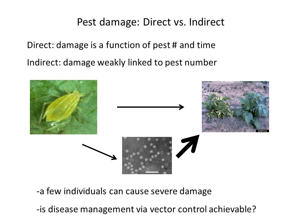 Pest damage: Direct vs. Indirect