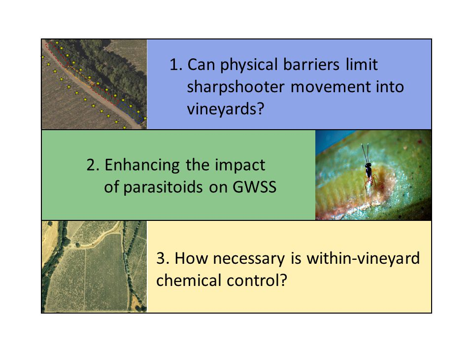 1. Can physical barriers limit sharpshooter movement into vineyards