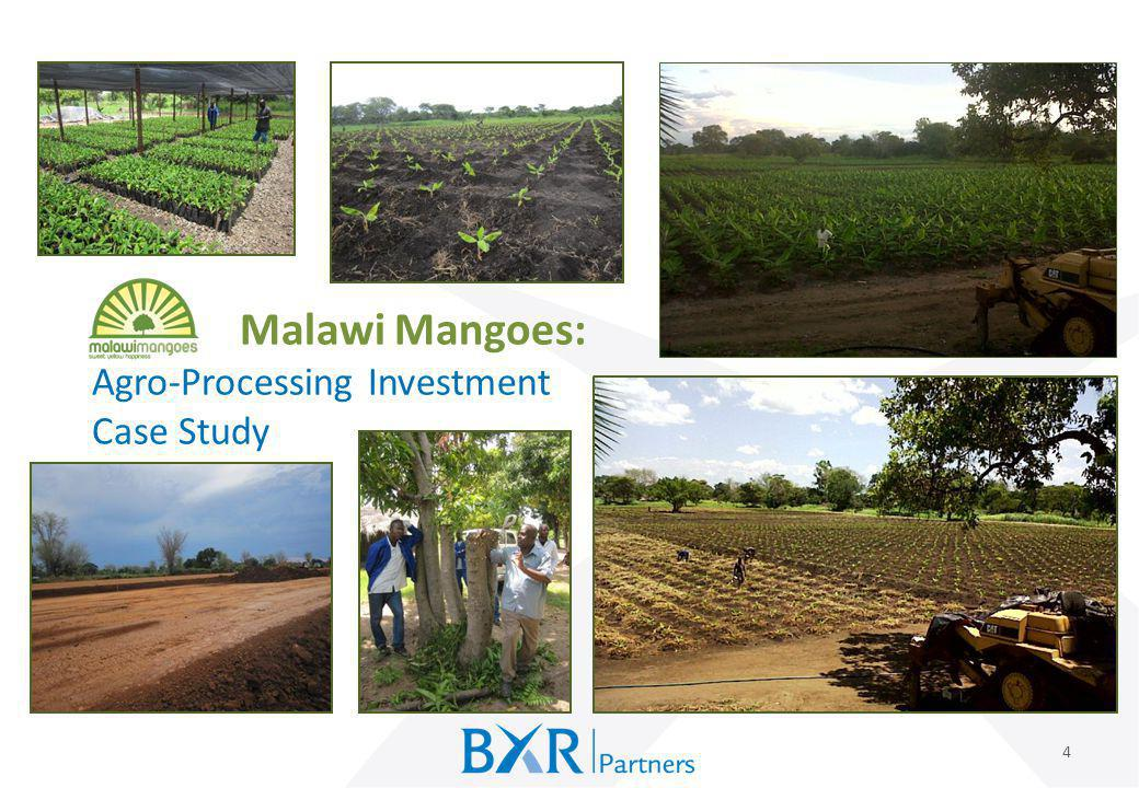 Malawi Mangoes: Agro-Processing Investment