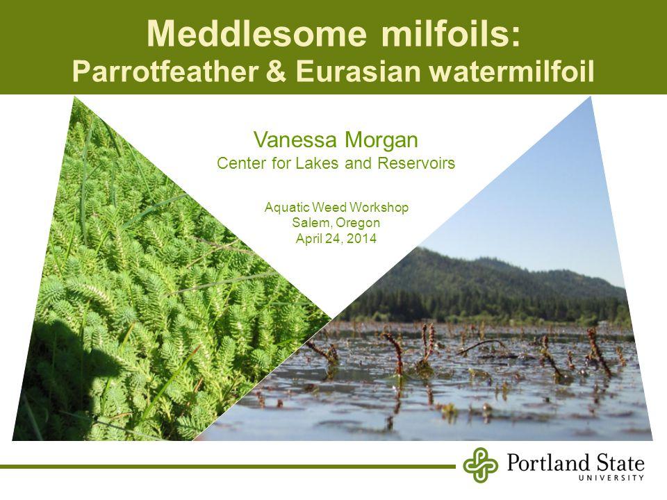 Meddlesome milfoils: Parrotfeather & Eurasian watermilfoil