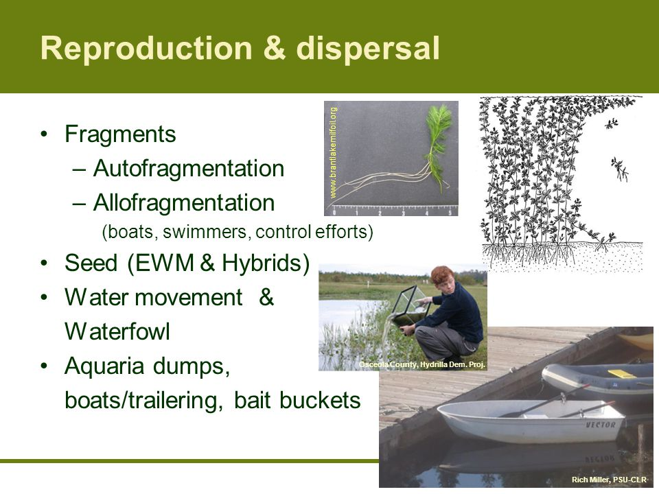 Reproduction & dispersal