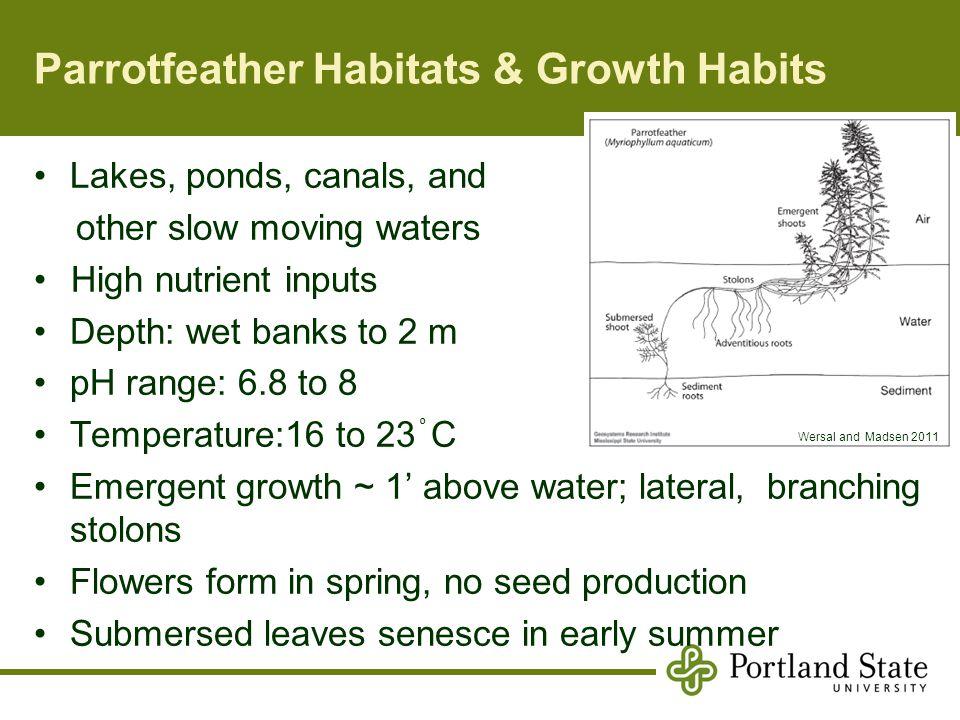 Parrotfeather Habitats & Growth Habits