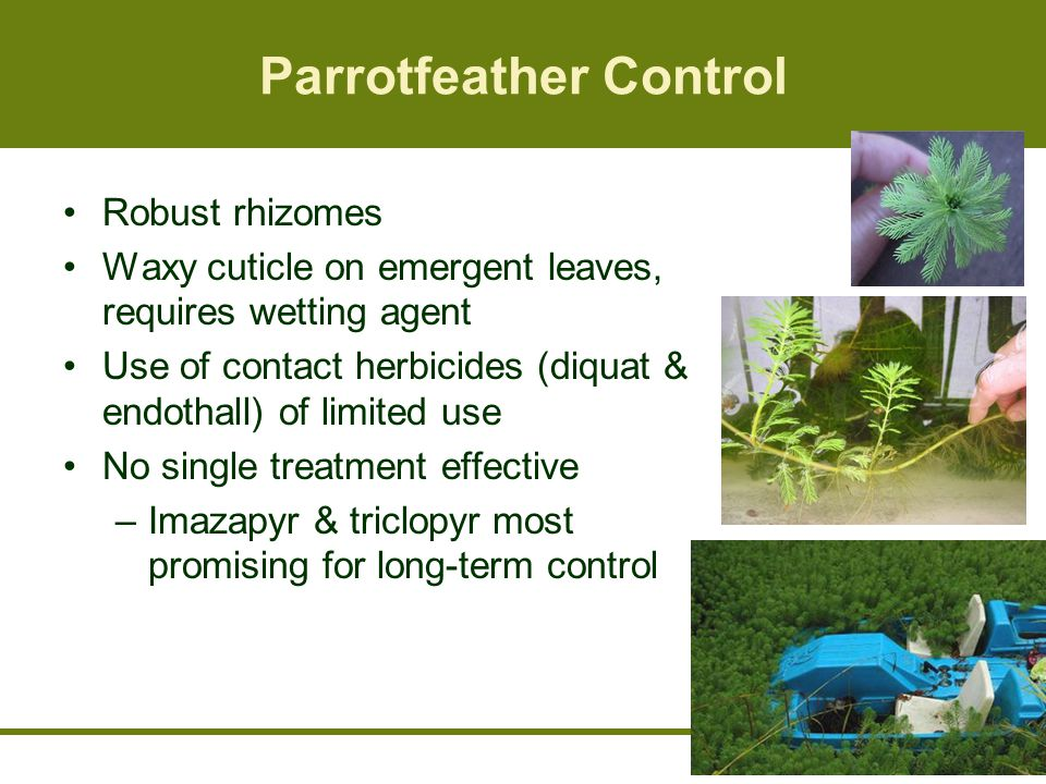 Parrotfeather Control