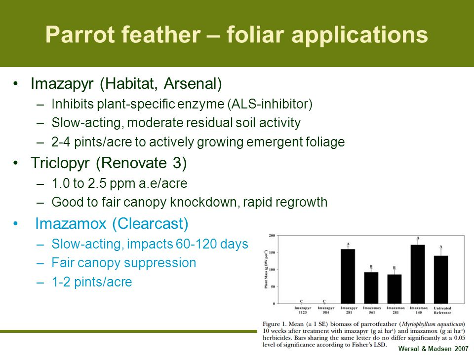 Parrot feather – foliar applications