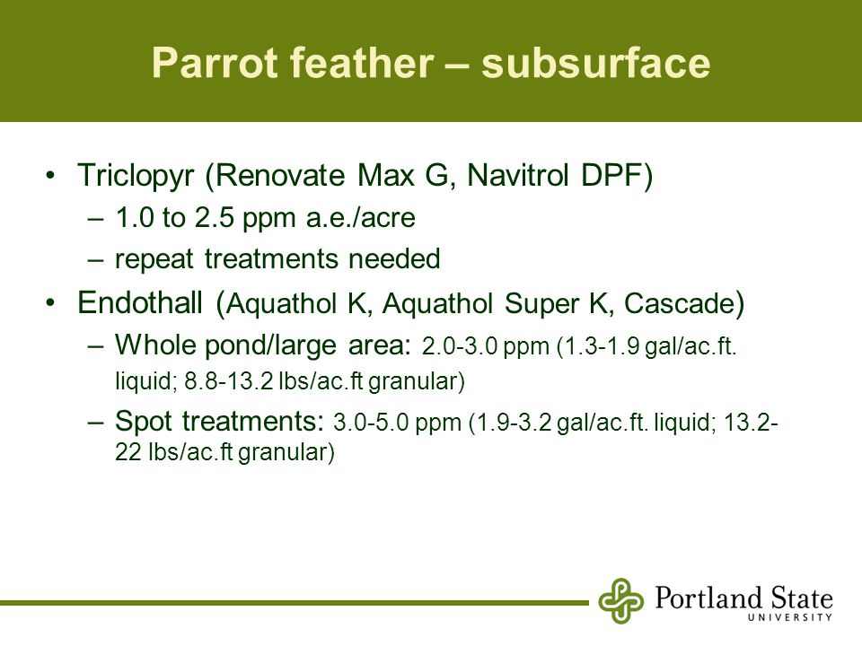 Parrot feather – subsurface