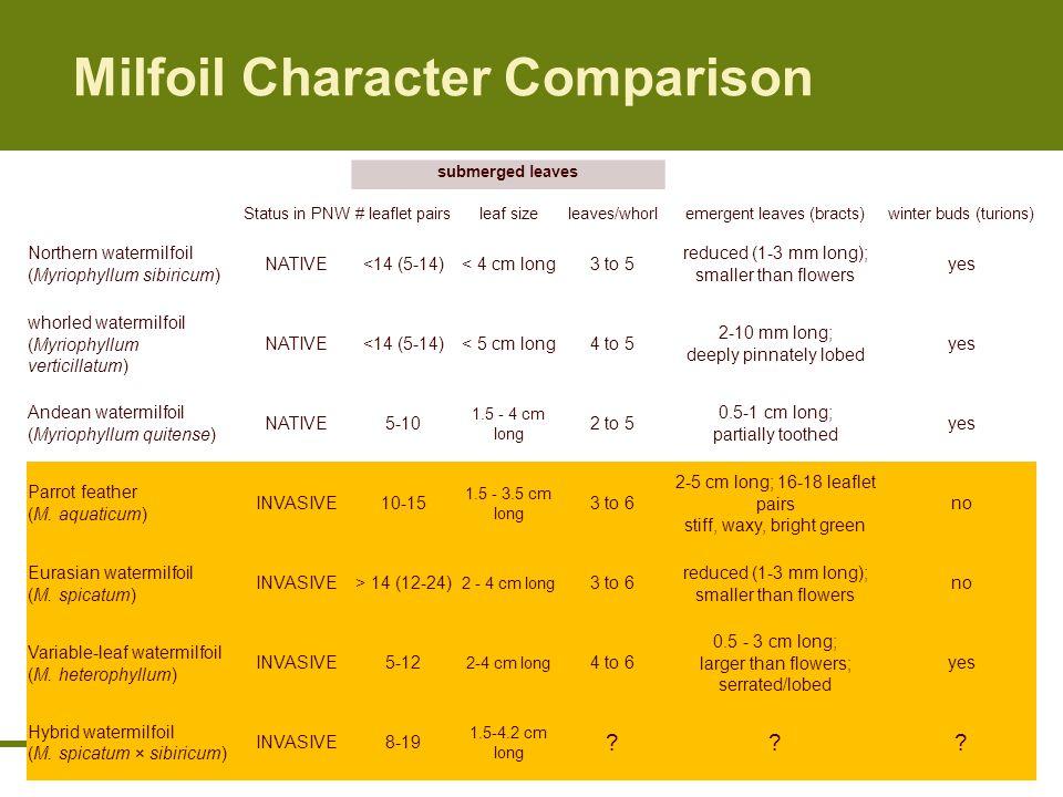 Milfoil Character Comparison