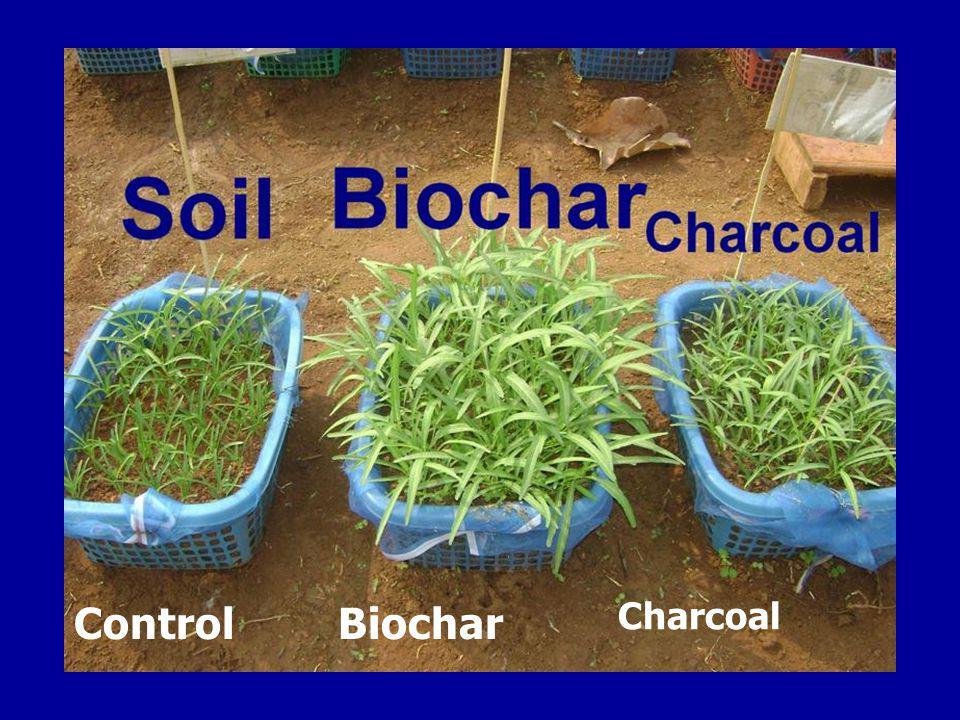 Control Biochar Charcoal