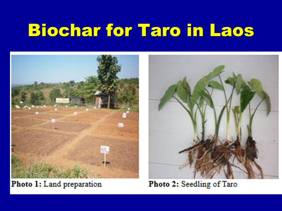 Biochar for Taro in Laos