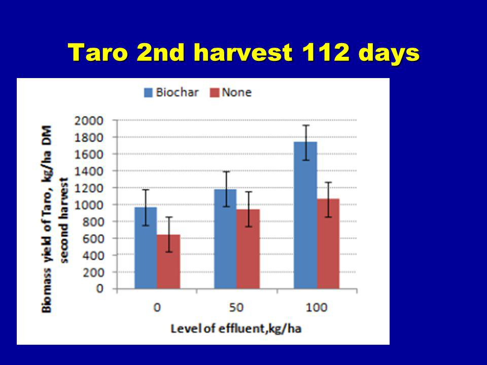 Taro 2nd harvest 112 days