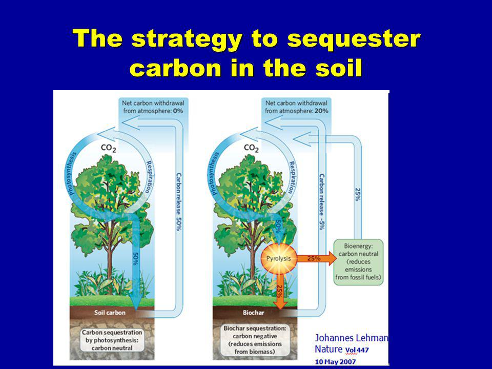 The strategy to sequester carbon in the soil