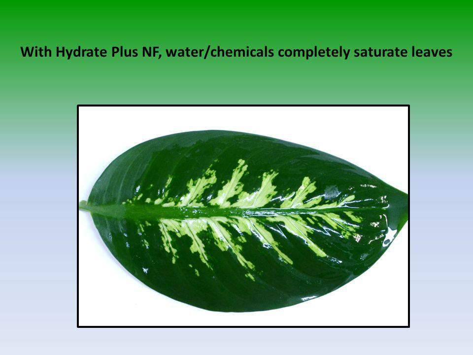 With Hydrate Plus NF, water/chemicals completely saturate leaves