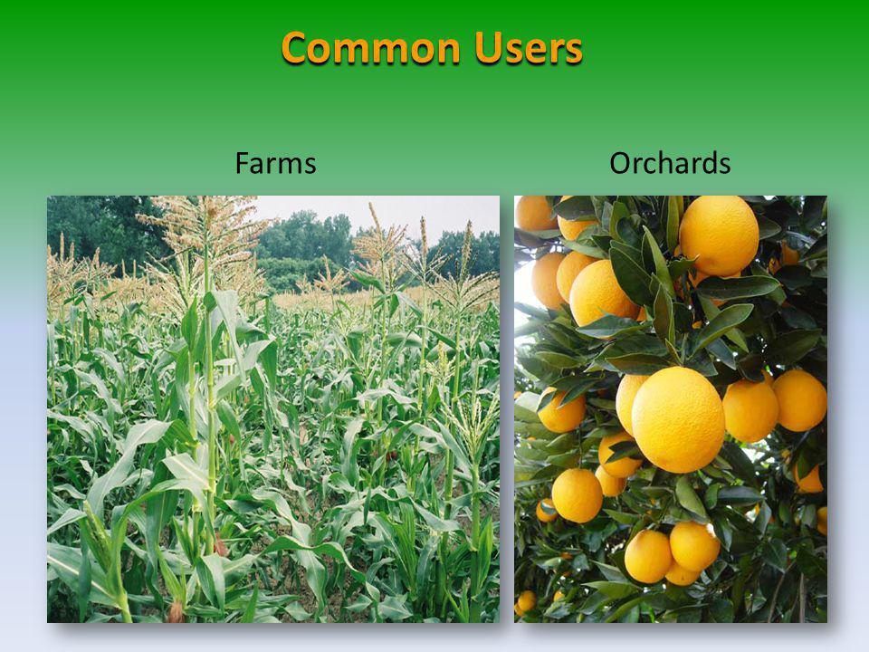 Common Users Farms Orchards