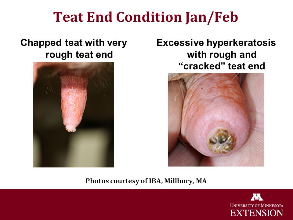 Teat End Condition Jan/Feb