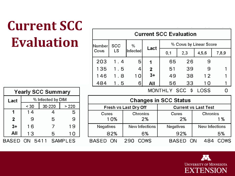 Current SCC Evaluation